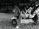 Bibliotecari brasiliani nudi per beneficenza: ecco le foto