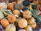 Orticolario 2016: il meglio tra arredo e giardini dell'edizione dell'Anemone