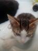 Gatti randagi: lei è Nora, viene da un tombino e cerca adozione